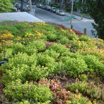 Annette's front porch green roof